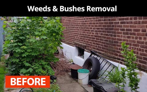 Weeds and bushes removal services in New York City - before photo